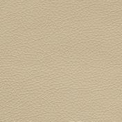 C8662 - Sand Dollar